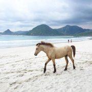 Boxer on the Beach